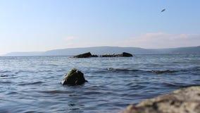 Θάλασσα και ήρεμοι ουρανοί και γλάροι απόθεμα βίντεο