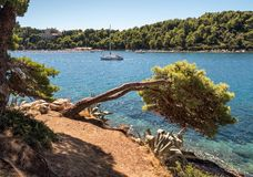 Θάλασσα και δέντρο κροατικό τοπίο Στοκ φωτογραφίες με δικαίωμα ελεύθερης χρήσης
