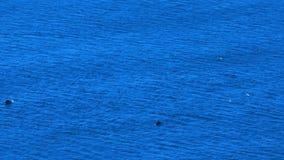 Θάλασσα και δελφίνια απόθεμα βίντεο