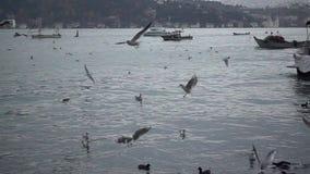 Θάλασσα και πετώντας seagulls σε αργή κίνηση φιλμ μικρού μήκους