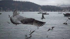 Θάλασσα και πετώντας seagulls σε αργή κίνηση απόθεμα βίντεο