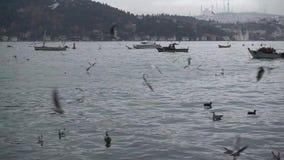 Θάλασσα και πετώντας seagulls απόθεμα βίντεο