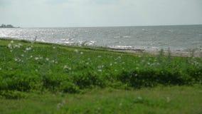 Θάλασσα και πράσινη ακτή στη θυελλώδη ημέρα απόθεμα βίντεο