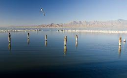θάλασσα Καλιφόρνιας salton Στοκ Εικόνες