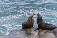 θάλασσα λιονταριών Καλι& Στοκ εικόνα με δικαίωμα ελεύθερης χρήσης