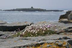 θάλασσα λυχνίδων Στοκ φωτογραφίες με δικαίωμα ελεύθερης χρήσης