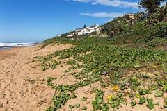 Θάλασσα παραλιών Vegetaation αμμόλοφων ενάντια μπλε νεφελώδες παράκτιο Seascape Στοκ φωτογραφίες με δικαίωμα ελεύθερης χρήσης