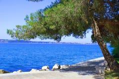 θάλασσα πεύκων τοπίων Στοκ φωτογραφία με δικαίωμα ελεύθερης χρήσης