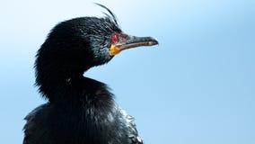 θάλασσα πουλιών Στοκ Εικόνες