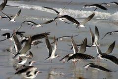 θάλασσα πουλιών Στοκ εικόνες με δικαίωμα ελεύθερης χρήσης