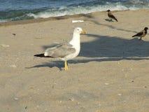 θάλασσα πουλιών Στοκ φωτογραφίες με δικαίωμα ελεύθερης χρήσης