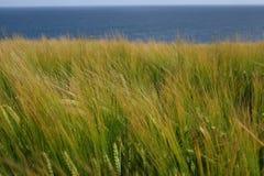 θάλασσα σίκαλης πεδίων Στοκ φωτογραφία με δικαίωμα ελεύθερης χρήσης