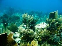 θάλασσα σκοπέλων ζωής υποβρύχια Στοκ Εικόνες