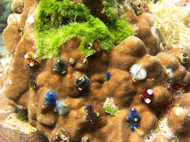 θάλασσα Ταϊλάνδη σκοπέλων ζωής κοραλλιών Στοκ Φωτογραφία