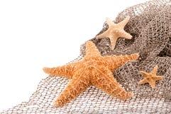 Θάλασσα τρία τα αστέρια των διαφορετικών μεγεθών Στοκ φωτογραφία με δικαίωμα ελεύθερης χρήσης