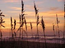 θάλασσα χλόης Στοκ φωτογραφία με δικαίωμα ελεύθερης χρήσης