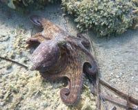 θάλασσα χταποδιών Στοκ φωτογραφίες με δικαίωμα ελεύθερης χρήσης