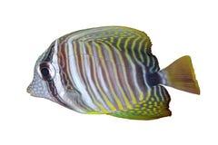 θάλασσα ψαριών Στοκ Φωτογραφίες