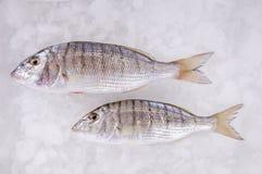 θάλασσα ψαριών Στοκ φωτογραφία με δικαίωμα ελεύθερης χρήσης