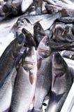 θάλασσα ψαριών Στοκ Εικόνα