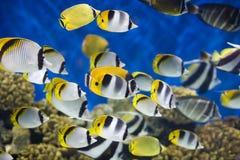 θάλασσα ψαριών Στοκ εικόνα με δικαίωμα ελεύθερης χρήσης