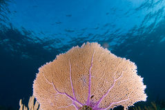 θάλασσα 2 ανεμιστήρων στοκ φωτογραφία