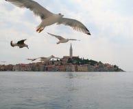 θάλασσα 5 γλάρων Στοκ φωτογραφία με δικαίωμα ελεύθερης χρήσης