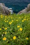 Θάλασσα 6 της Ιαπωνίας Στοκ φωτογραφίες με δικαίωμα ελεύθερης χρήσης
