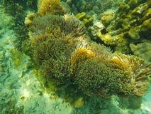 Θάλασσα anemones στη θάλασσα Στοκ φωτογραφίες με δικαίωμα ελεύθερης χρήσης