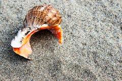 Θάλασσα Shell και πέτρες Στοκ Φωτογραφία
