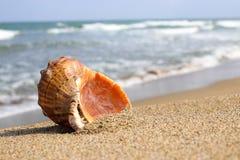 Θάλασσα Shell και πέτρες Στοκ φωτογραφία με δικαίωμα ελεύθερης χρήσης