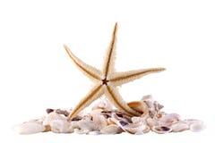 Θάλασσα Shell Στοκ εικόνες με δικαίωμα ελεύθερης χρήσης