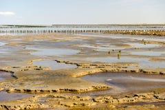 θάλασσα wadden της Ολλανδίας στοκ εικόνες με δικαίωμα ελεύθερης χρήσης
