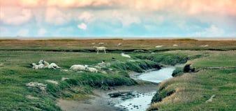θάλασσα wadden mando νησιών Στοκ Εικόνες