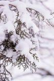 Θάμνοι ιουνιπέρων στο χιόνι πρώτο χιόνι Χιόνι στον κήπο στο θόριο Στοκ Εικόνα