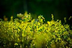 Θάμνοι κάτω από τον ήλιο στοκ φωτογραφίες με δικαίωμα ελεύθερης χρήσης