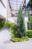 Θάμνοι και δέντρα στοκ εικόνες με δικαίωμα ελεύθερης χρήσης