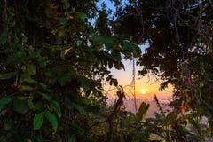 Θάμνοι και δέντρα στοκ εικόνα με δικαίωμα ελεύθερης χρήσης