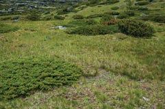Θάμνοι μεταξύ της δύσκολης έκτασης στις ορεινές περιοχές στοκ φωτογραφίες με δικαίωμα ελεύθερης χρήσης