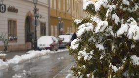 Θάμνοι με τα πράσινα φύλλα κάτω από το χιόνι απόθεμα βίντεο