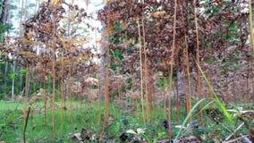 Θάμνοι που αυξάνονται μέσα στο δάσος απόθεμα βίντεο