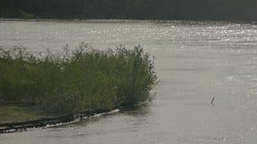 Θάμνοι σε μια παραλία κοντά στο σε αργή κίνηση βίντεο ποταμών απόθεμα βίντεο