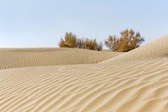 Θάμνοι στην έρημο με το φυσικό κύμα άμμου στοκ εικόνα