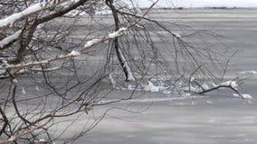 Θάμνοι στον πάγο κατά μήκος της άκρης μιας παγωμένης λίμνης στο πολιτεία της Washington απόθεμα βίντεο