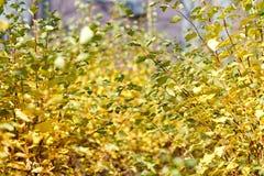 Θάμνοι φθινοπώρου στην πόλη Στοκ φωτογραφία με δικαίωμα ελεύθερης χρήσης