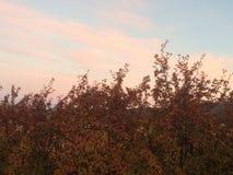 Θάμνοι φθινοπώρου Στοκ Εικόνα