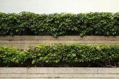 θάμνοι Στοκ φωτογραφία με δικαίωμα ελεύθερης χρήσης