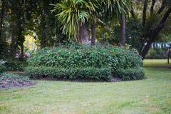 Θάμνος λουλουδιών στη βάση του δέντρου στο υπόβαθρο κήπων στοκ εικόνες με δικαίωμα ελεύθερης χρήσης