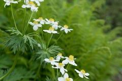 Θάμνος με τα λουλούδια που ανθίζουν στο δάσος στοκ φωτογραφία με δικαίωμα ελεύθερης χρήσης