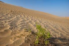 θάμνος πράσινος στοκ φωτογραφίες με δικαίωμα ελεύθερης χρήσης